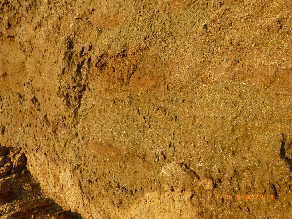 Miozän4_Torsten Marx